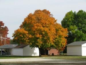 Fall in Illinois 11