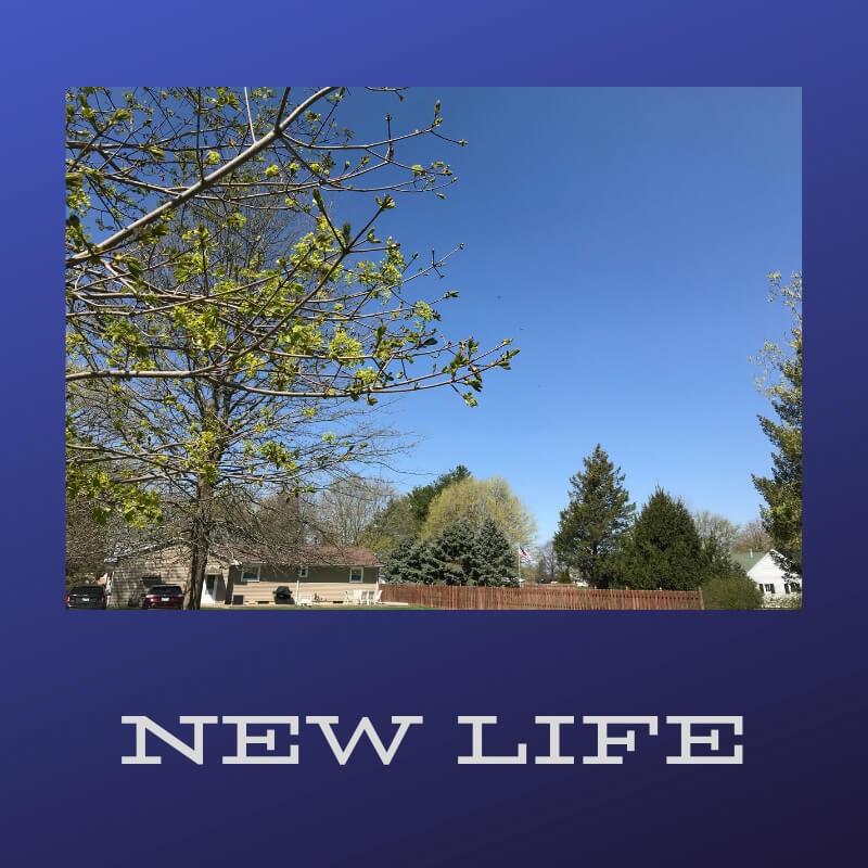 Creation Prtompts - New Life