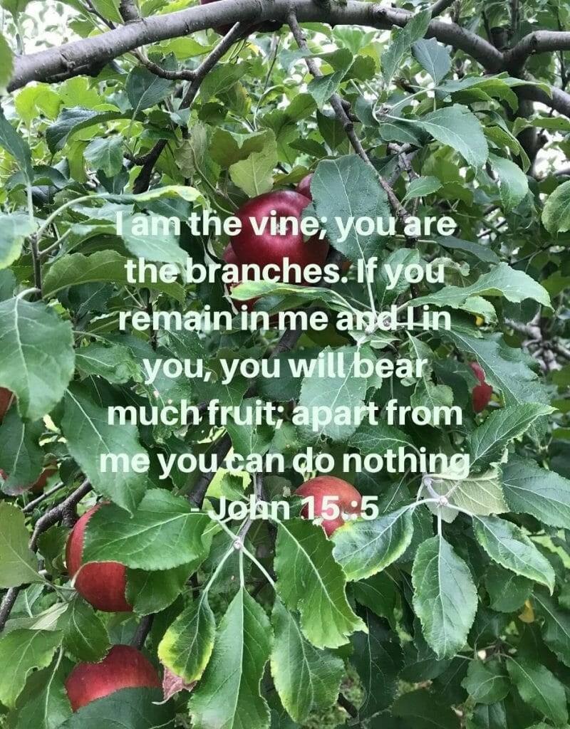 I am the Vine, you are the branches - John 15:5