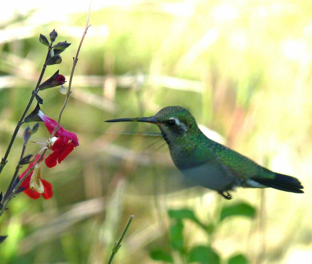 Hummingbirds - photo by Elaine Koutsiukos